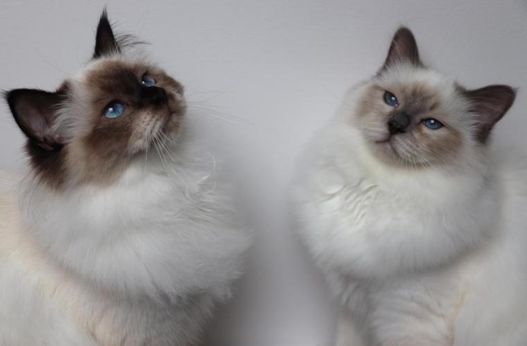 Esmeraldo con sua sorella Delilah