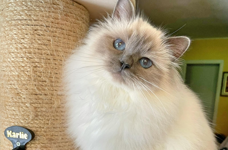 Très jolie Florence Rose